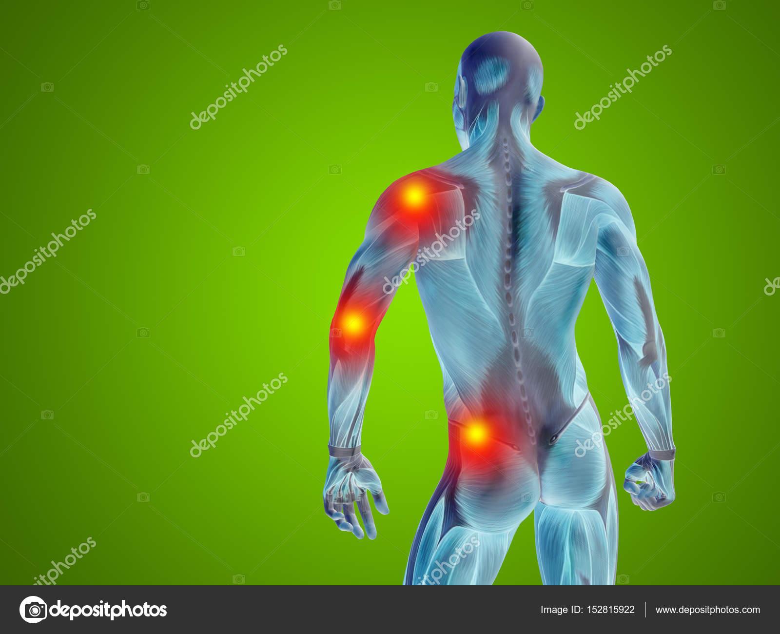 male upper body anatomy — Stock Photo © design36 #152815922
