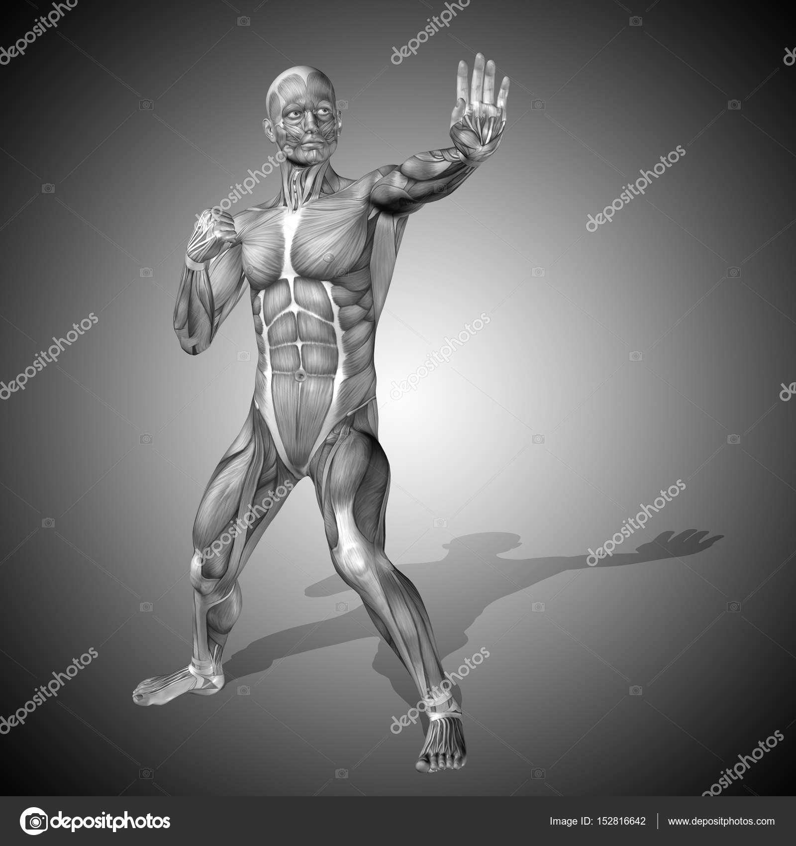 Anatomía del cuerpo masculino fuerte — Foto de stock © design36 ...