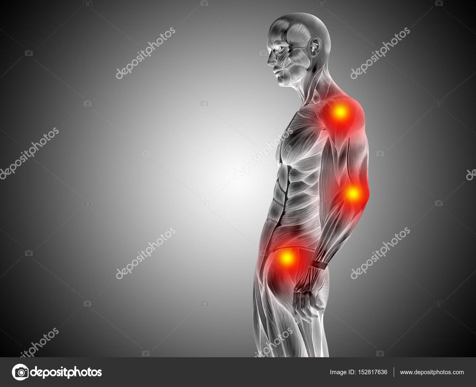male upper body anatomy — Stock Photo © design36 #152817636