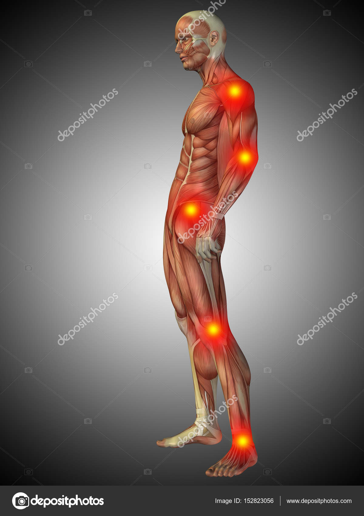 Human Body Anatomy With Pain Signs Stock Photo Design36 152823056