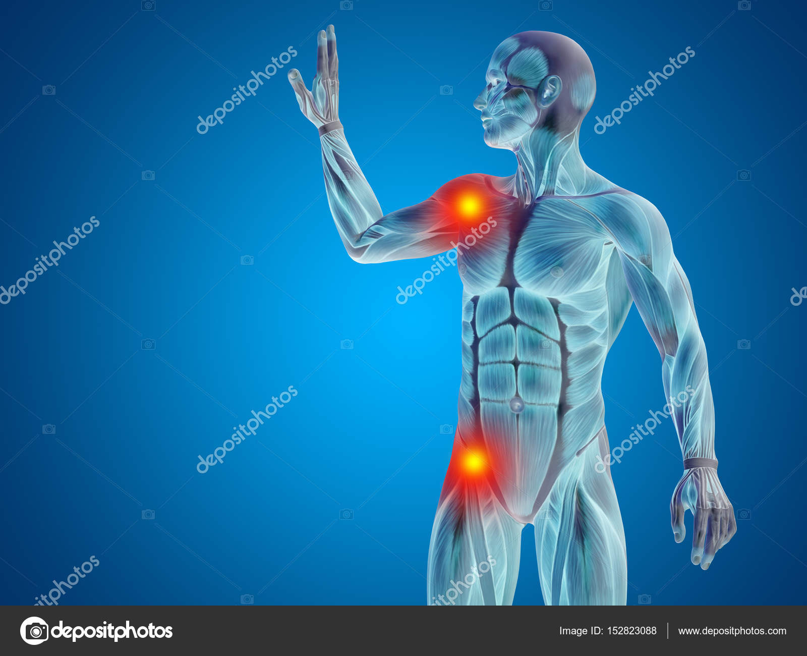 Male Upper Body Anatomy Stock Photo Design36 152823088