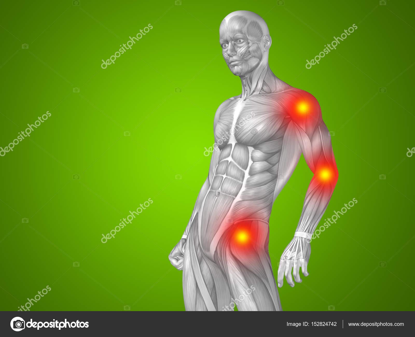 male upper body anatomy — Stock Photo © design36 #152824742