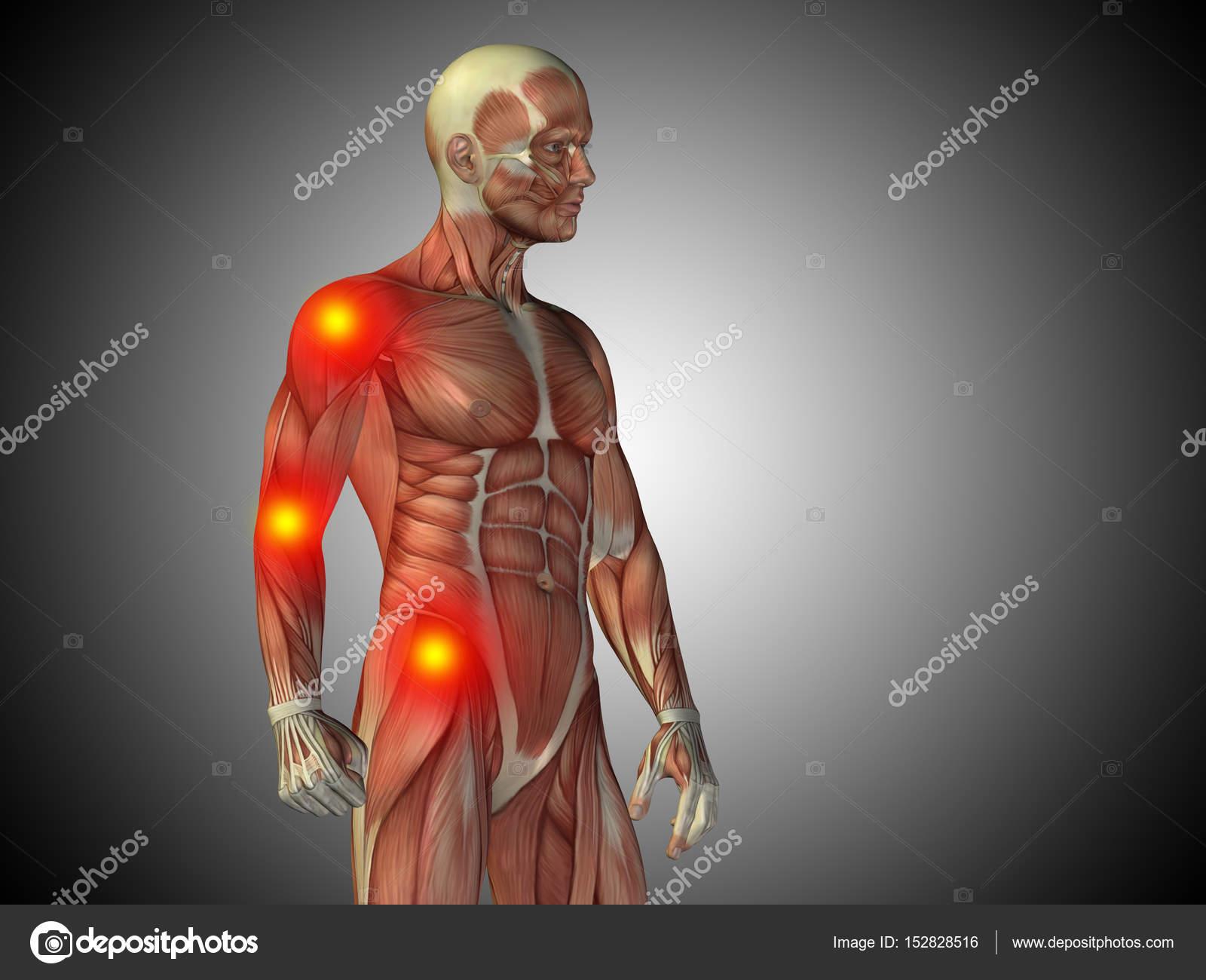 Anatomía de torso masculino — Foto de stock © design36 #152828516