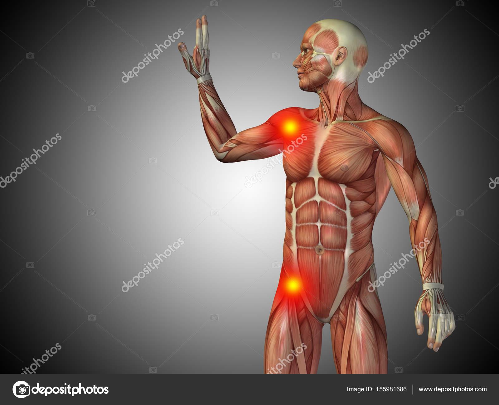 Konzeptionelle 3d Darstellung menschlicher Mensch Anatomie ...