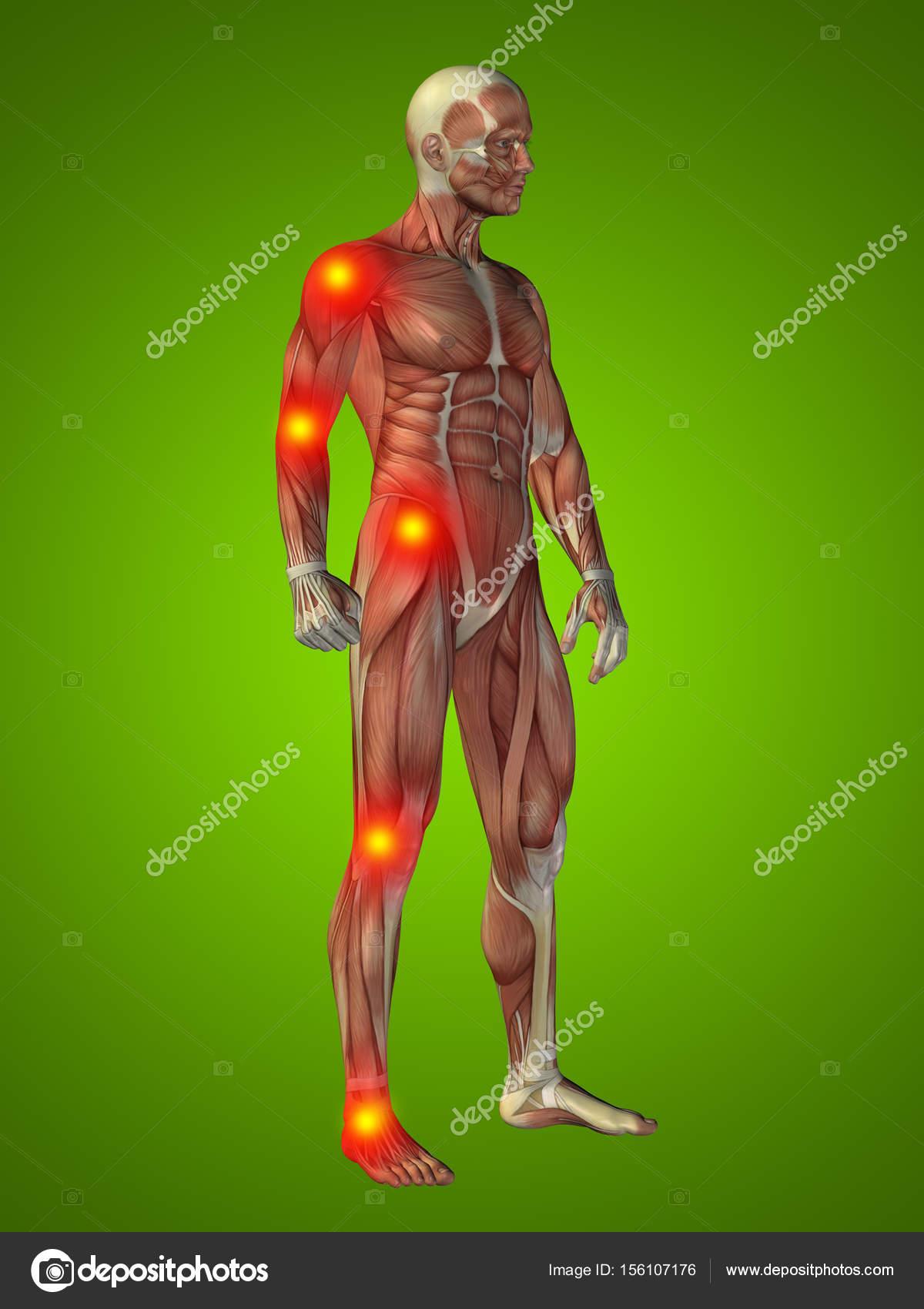 menschlichen Körper Anatomie mit Gelenk oder Knochen Schmerzen ...
