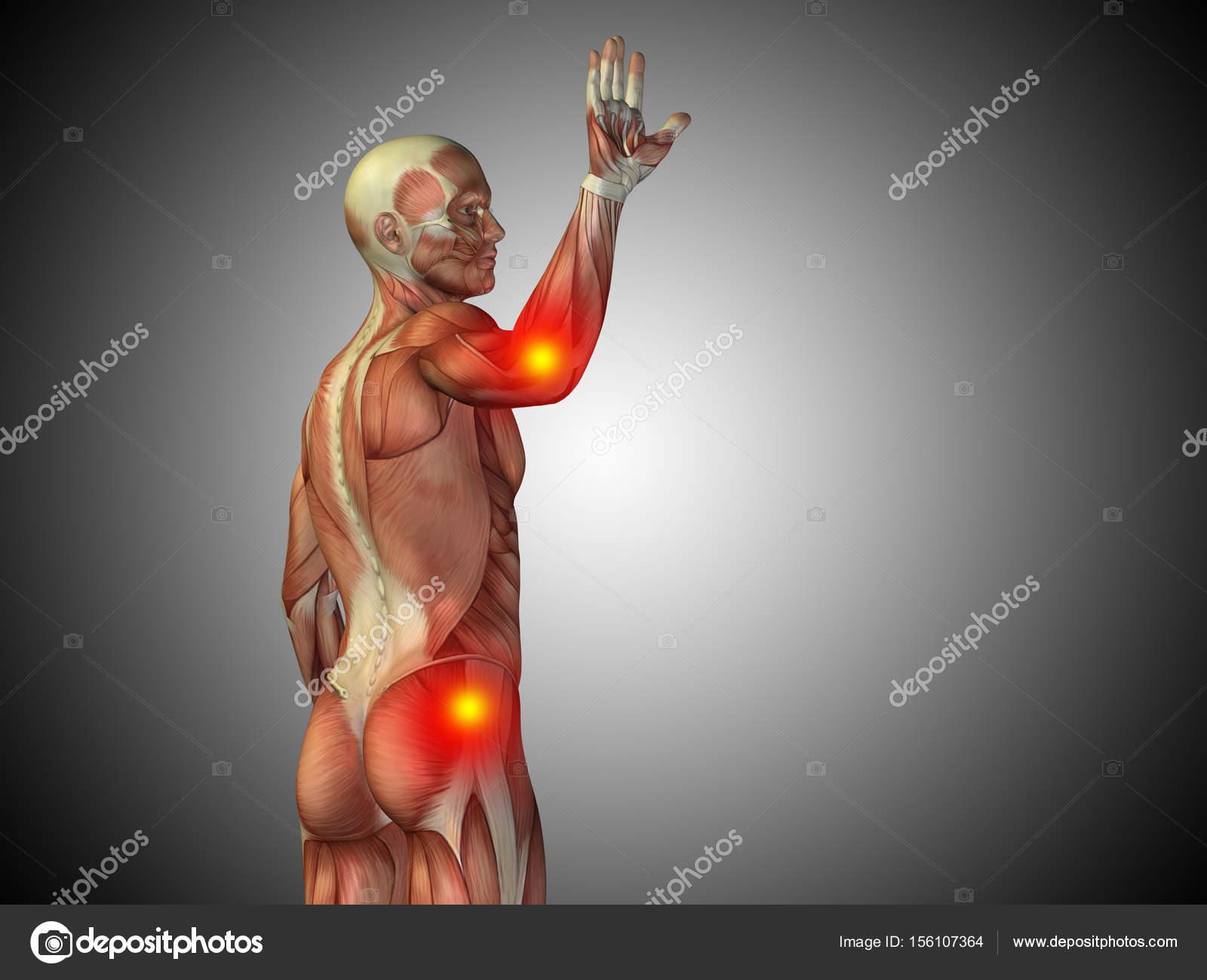 Anatomía de torso masculino — Foto de stock © design36 #156107364