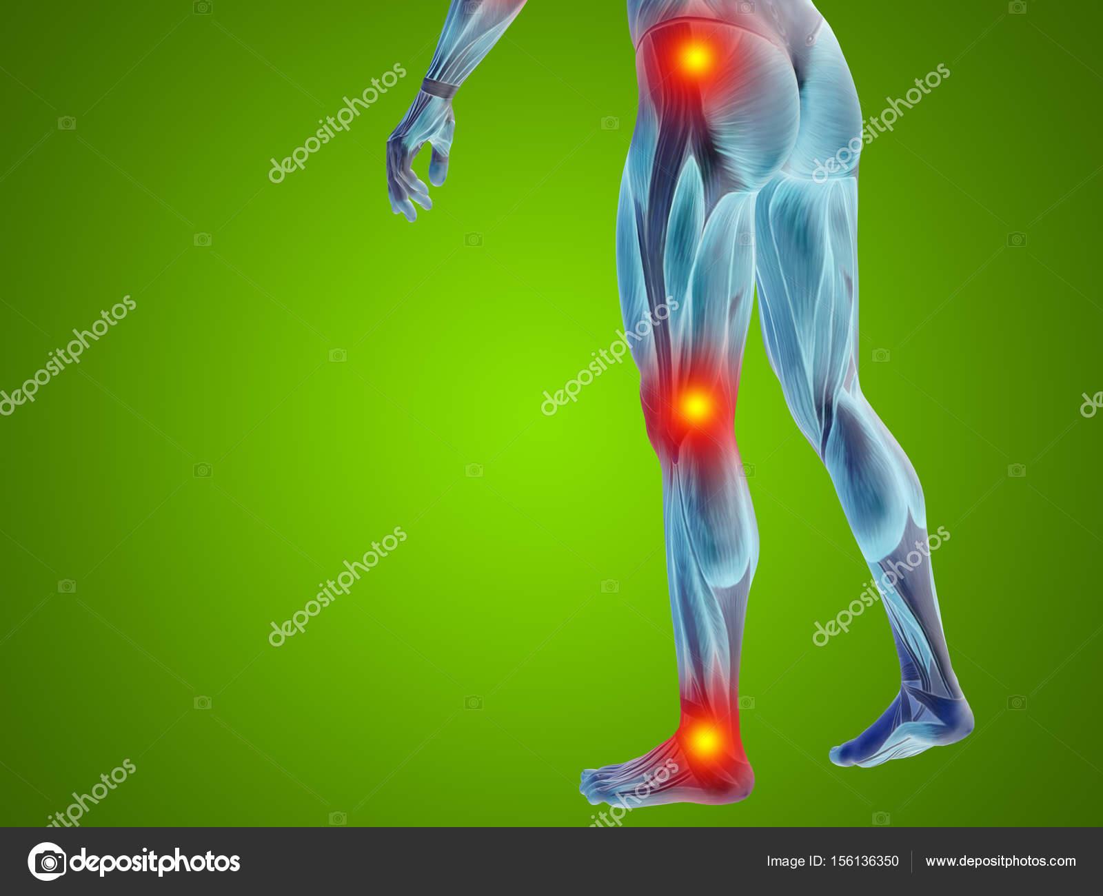 Anatomía masculina de cuerpo inferior — Foto de stock © design36 ...