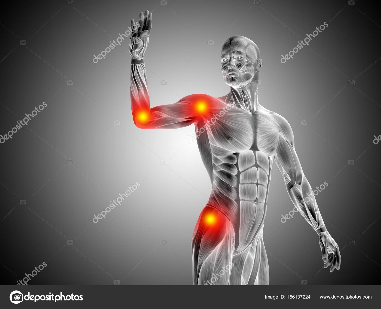 Male Upper Body Anatomy Stock Photo Design36 156137224