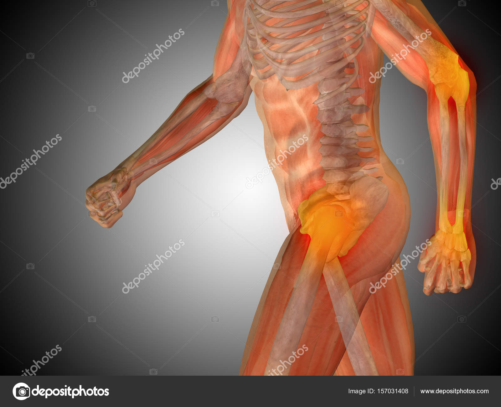 Gestaltung der menschlichen Anatomie — Stockfoto © design36 #157031408