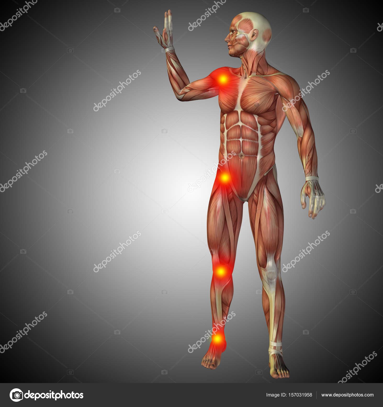 menschliche Anatomie Körper — Stockfoto © design36 #157031958