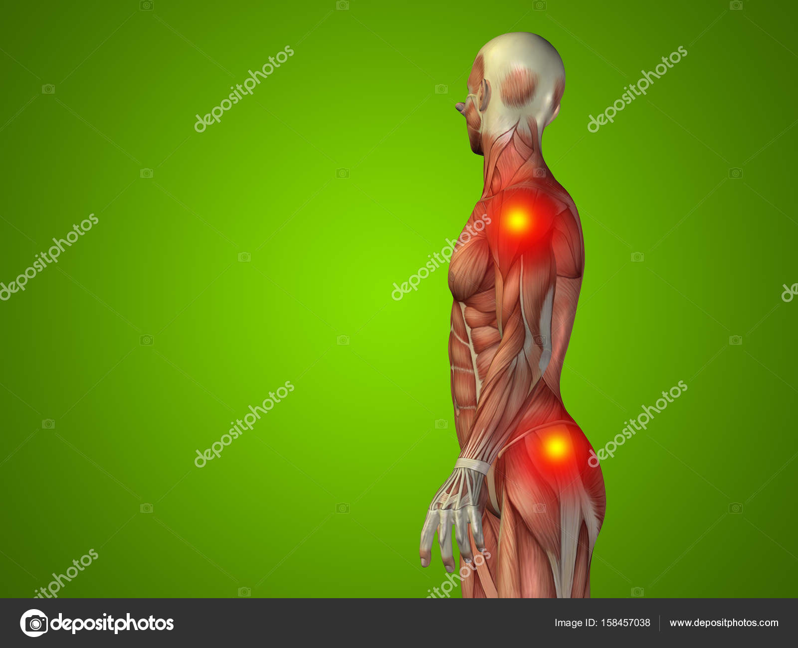 human man anatomy upper body — Stock Photo © design36 #158457038