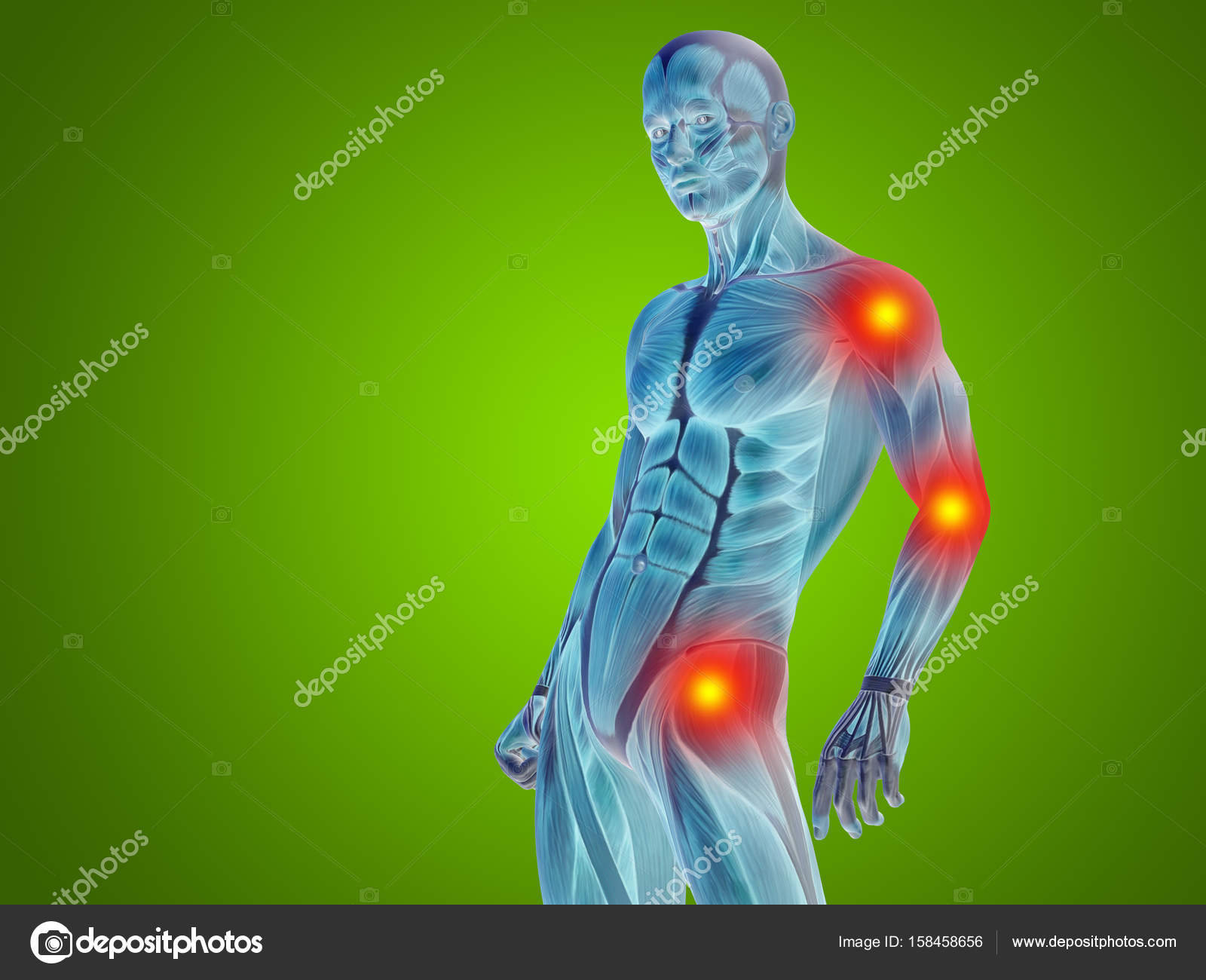 Human Man Anatomy Upper Body Stock Photo Design36 158458656