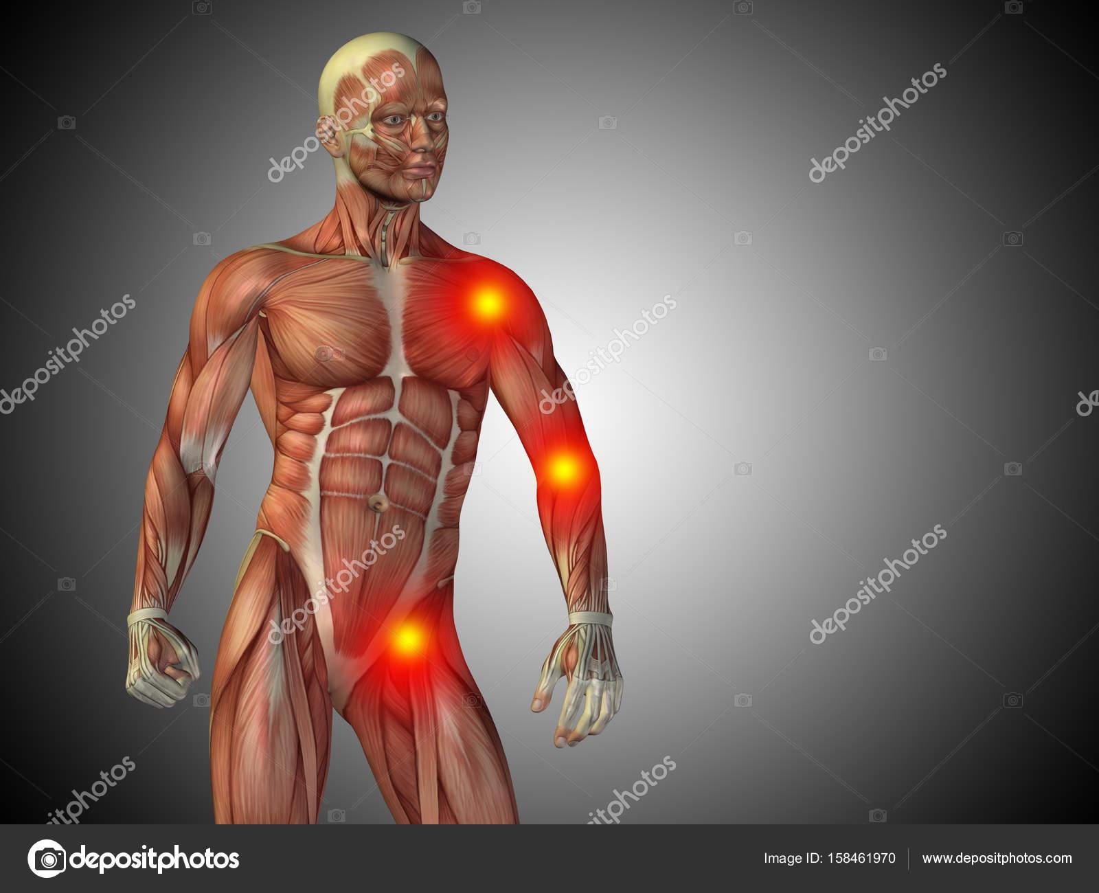 parte superior del cuerpo de la anatomía del hombre humano — Fotos ...