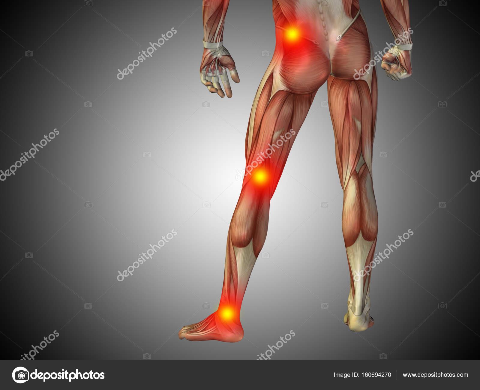 menschliche Anatomie Unterkörper — Stockfoto © design36 #160694270