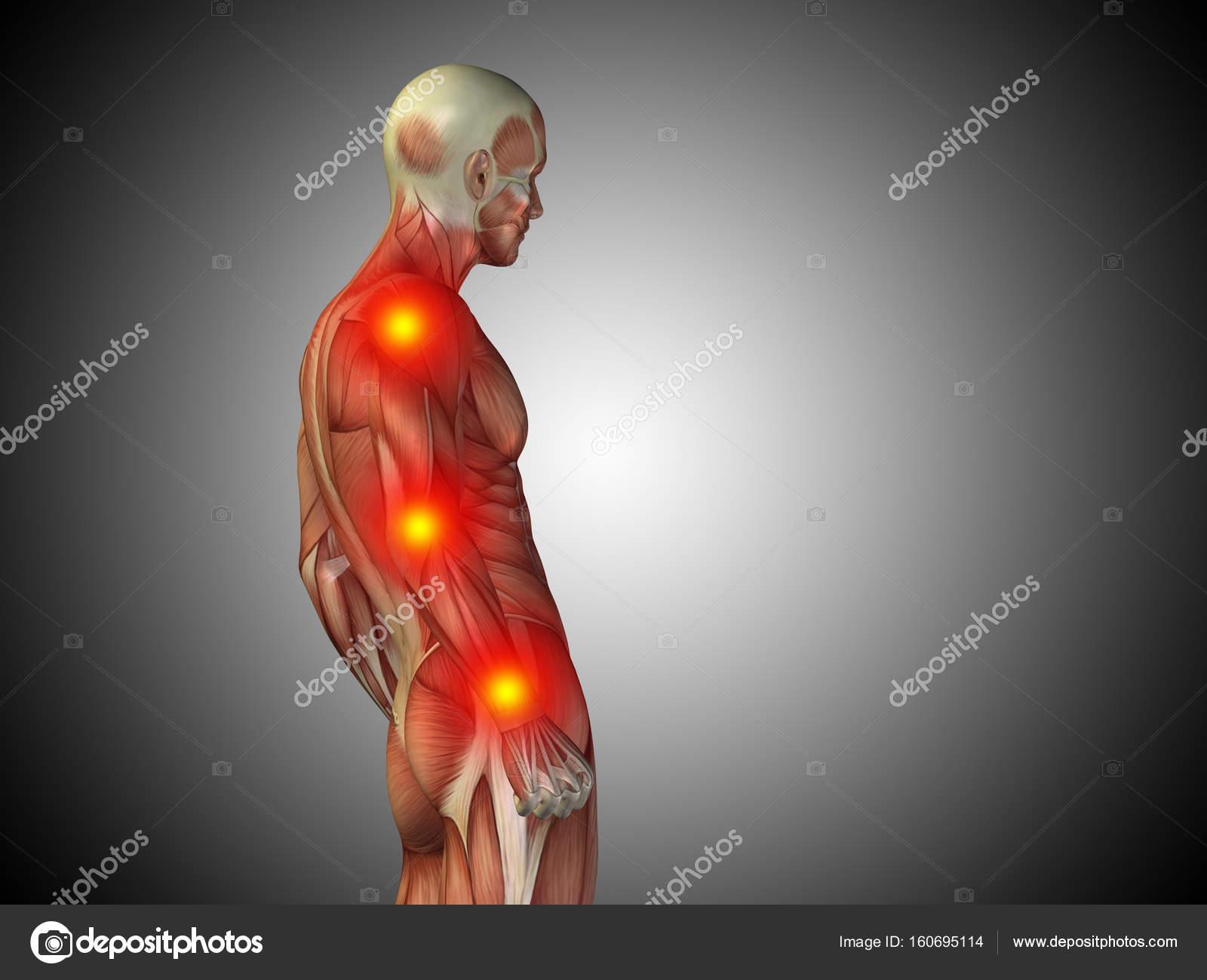 Mensch-Anatomie-Oberkörper — Stockfoto © design36 #160695114