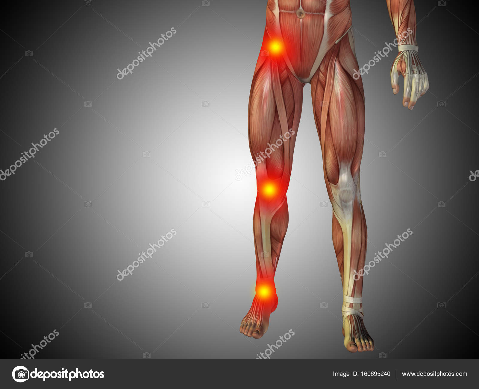 Human Anatomy Lower Body Stock Photo Design36 160695240