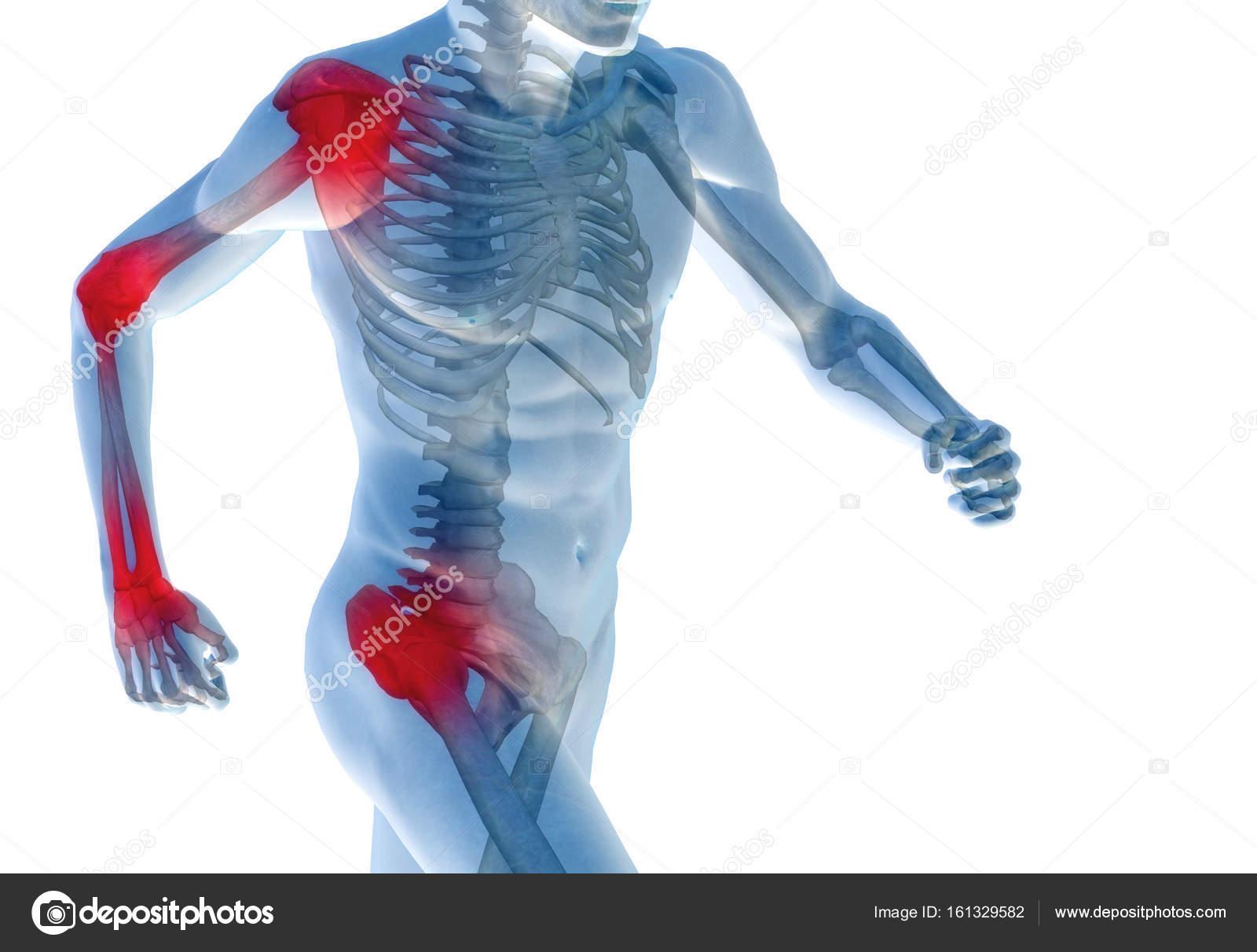 modelo de anatomía funcionamiento humano — Fotos de Stock © design36 ...