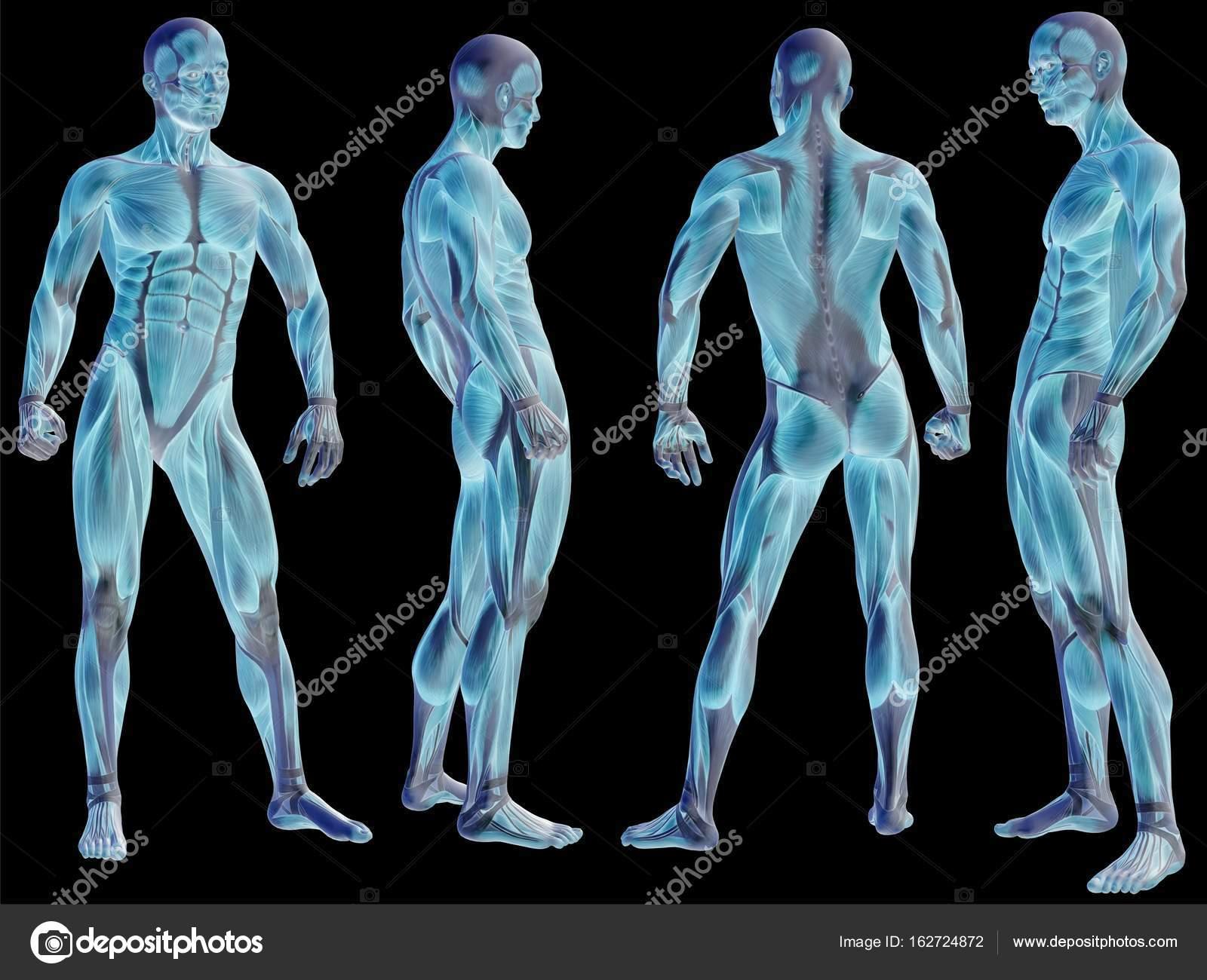 menschliche Anatomie Abbildung — Stockfoto © design36 #162724872