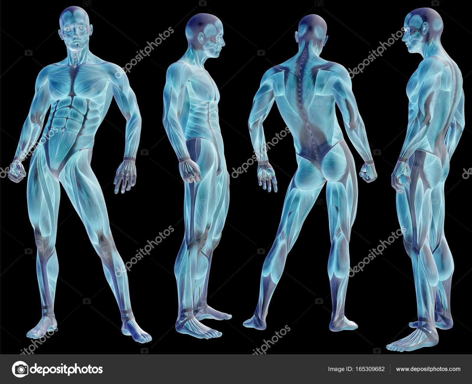 High Resolution Concept Or Conceptual Human Or Man 3d Anatomy Body
