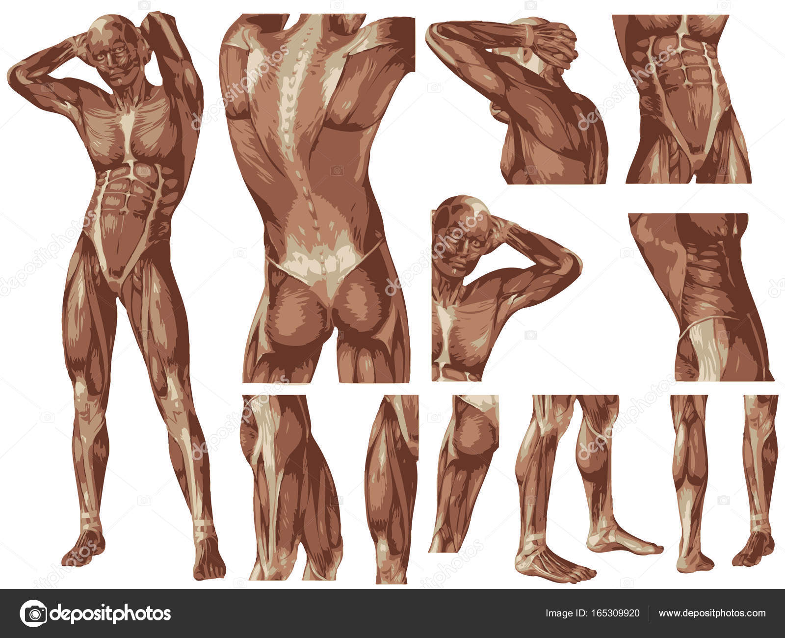 Conceptual Human Anatomy Body Stock Photo Design36 165309920
