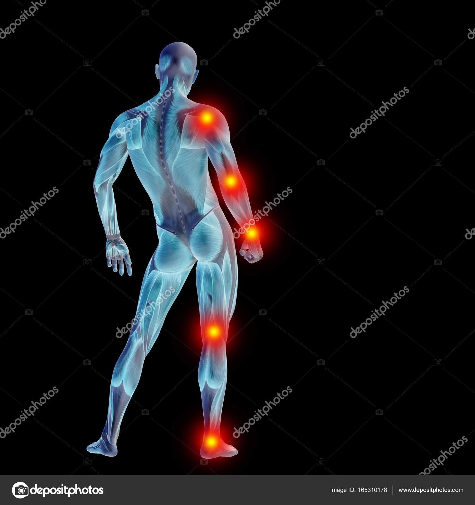 Alta resolución concepto conceptual 3d anatomía humana cuerpo con ...