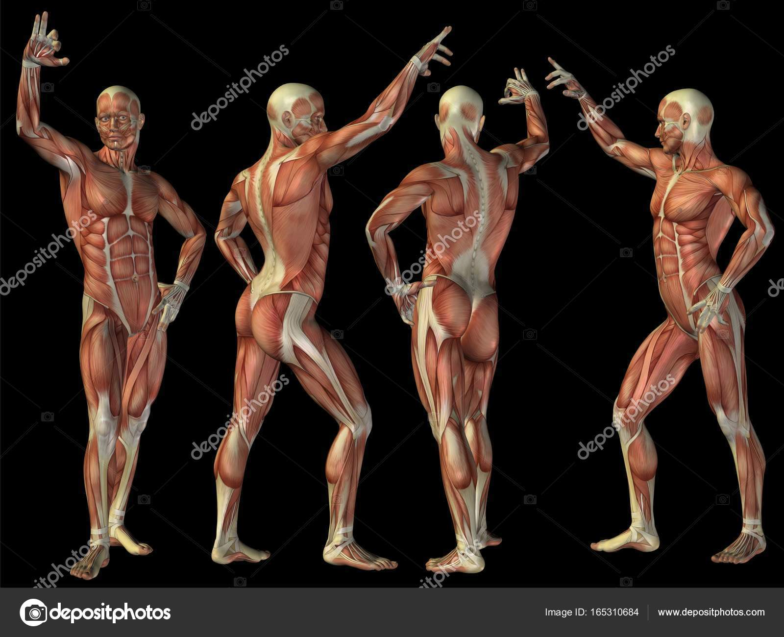 High resolution concept or conceptual human or man 3D anatomy body ...