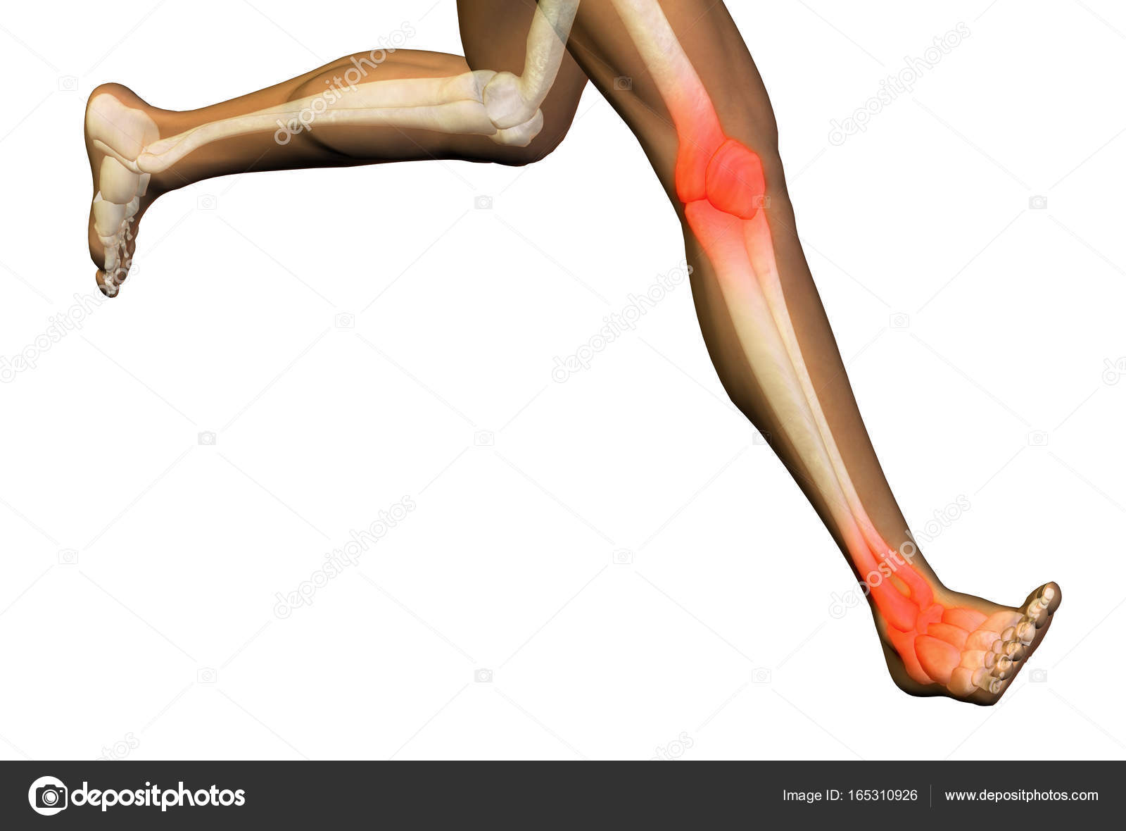 Conceptual 3D illustration human man anatomy health design, joint or ...