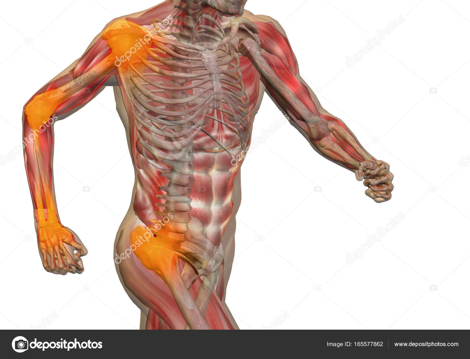 Conceptual 3D illustration human man anatomy or health design, joint ...