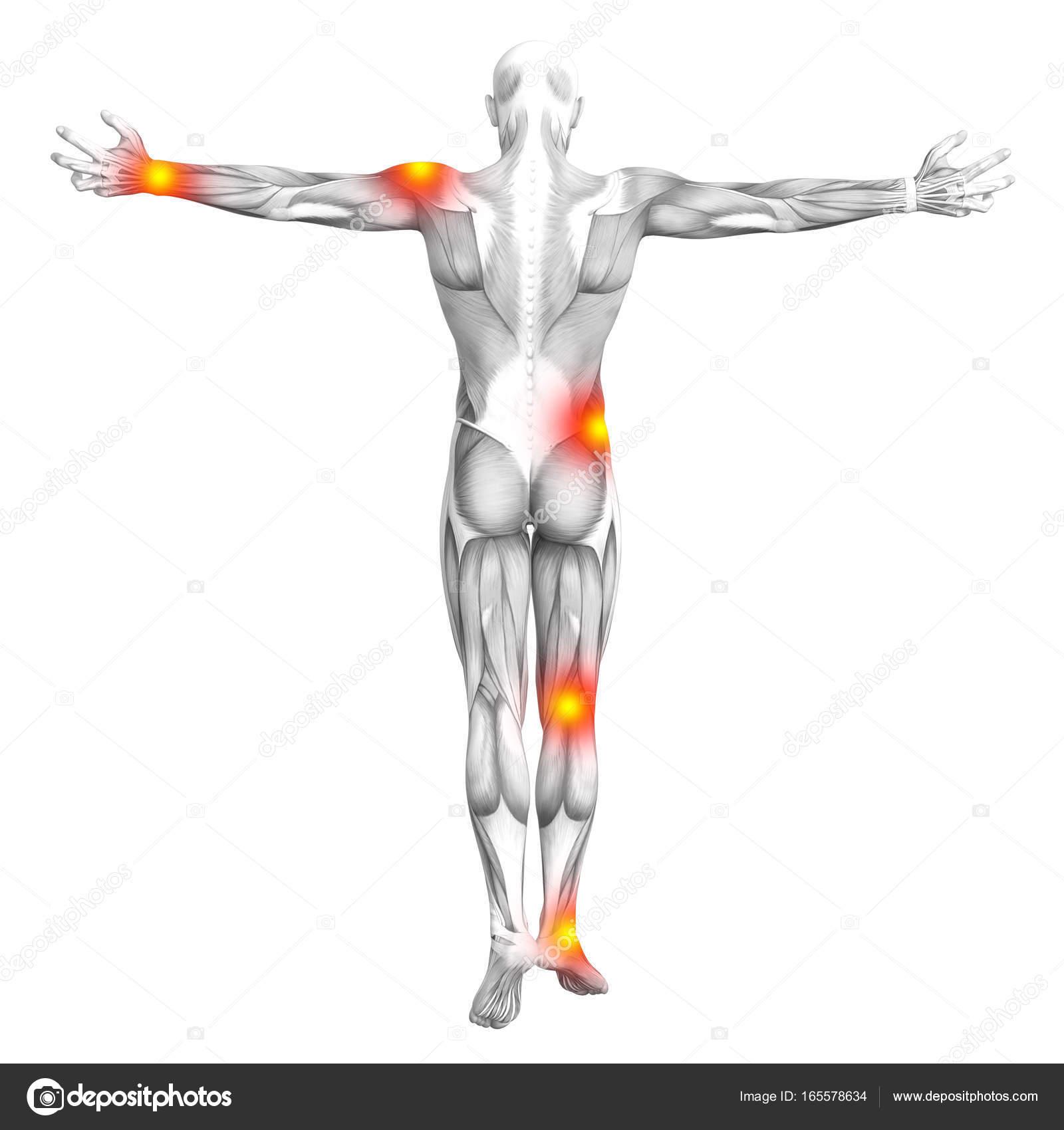Anatomía del músculo humano conceptual con rojo y amarillo punto ...