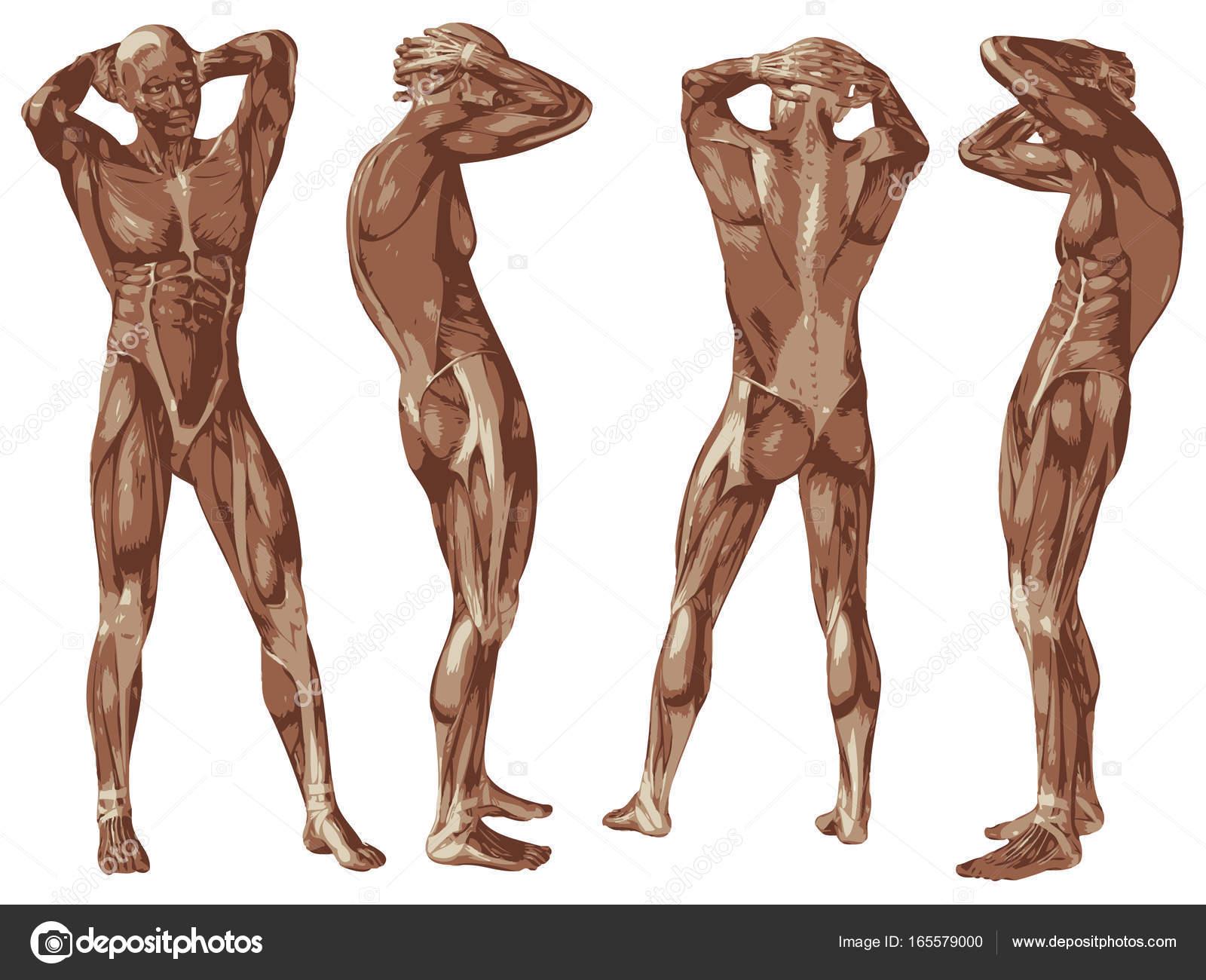 Niedlich Echte 3d Anatomie Galerie - Anatomie Von Menschlichen ...