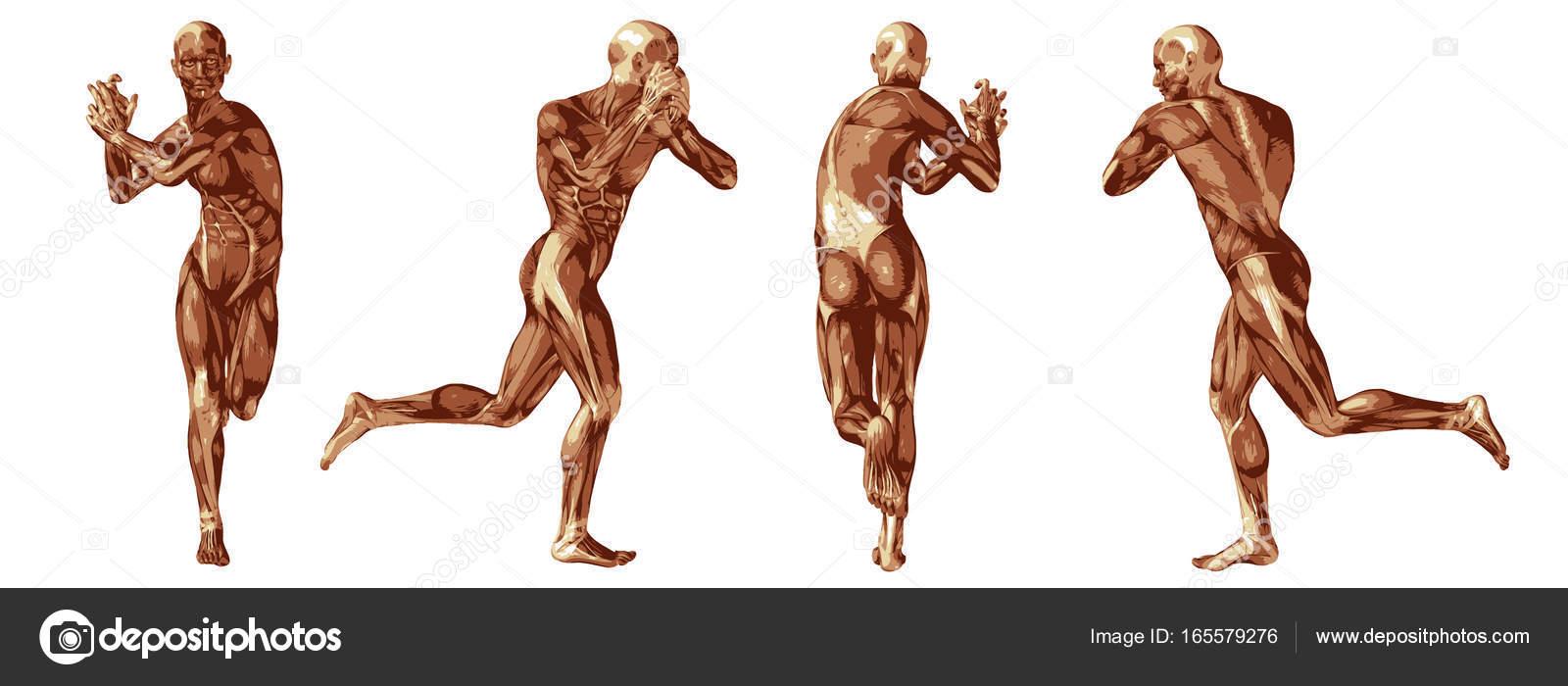 Alta resolución concepto conceptual humano o cuerpo de anatomía 3d ...
