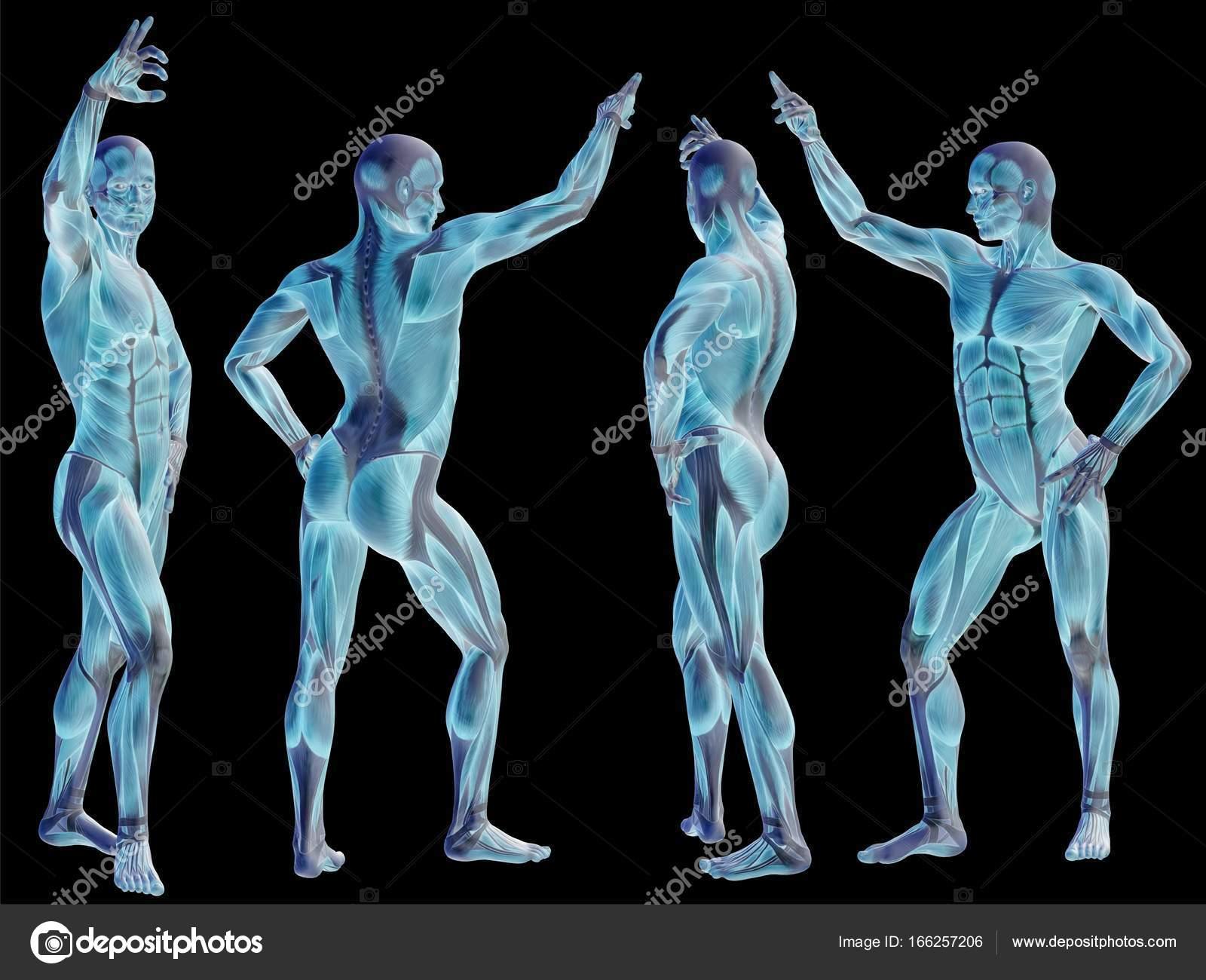 Conceptual 3d Human Anatomy Stock Photo Design36 166257206