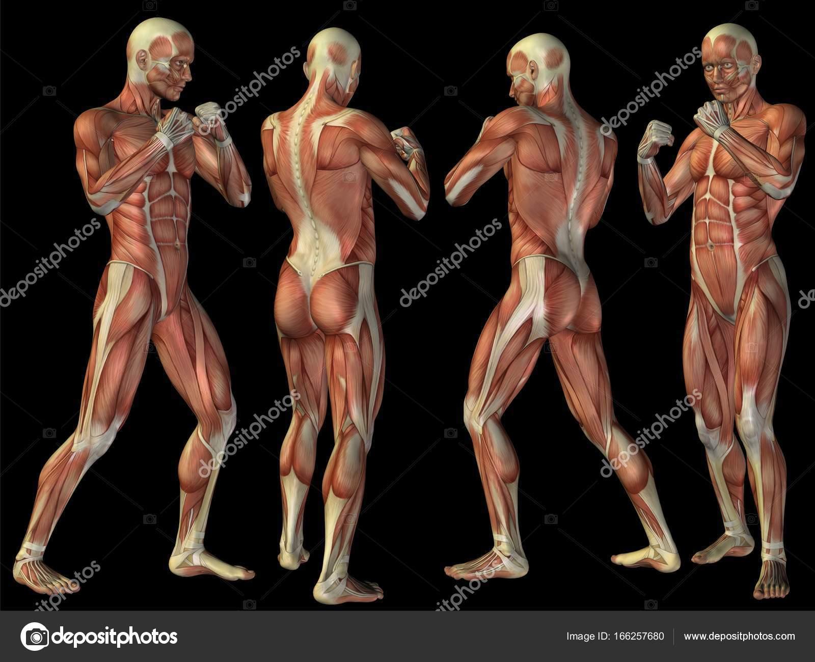 conceptual 3D human anatomy — Stock Photo © design36 #166257680