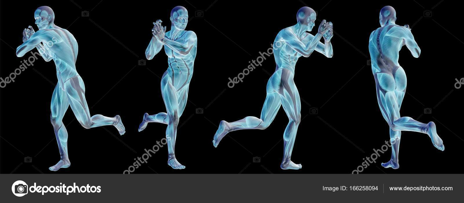 Conceptual 3d Human Anatomy Stock Photo Design36 166258094