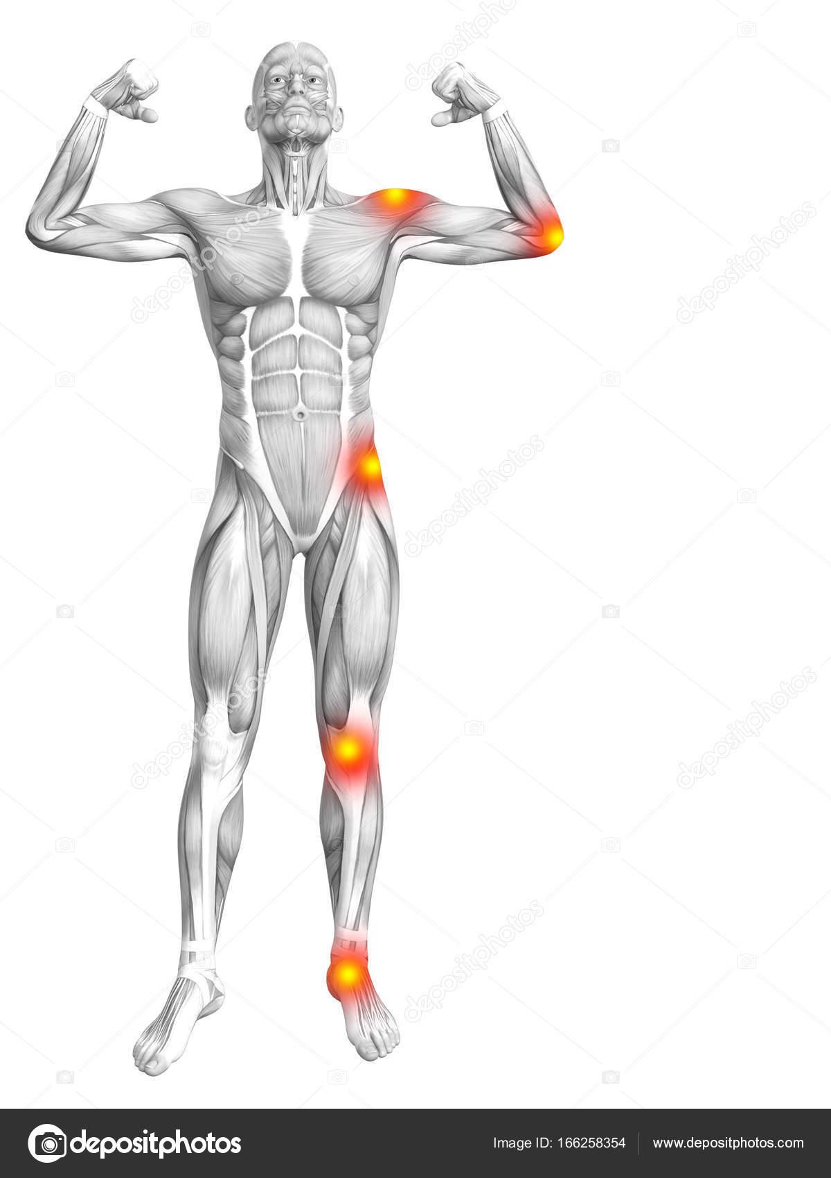 grundlegende menschliche Anatomie — Stockfoto © design36 #166258354