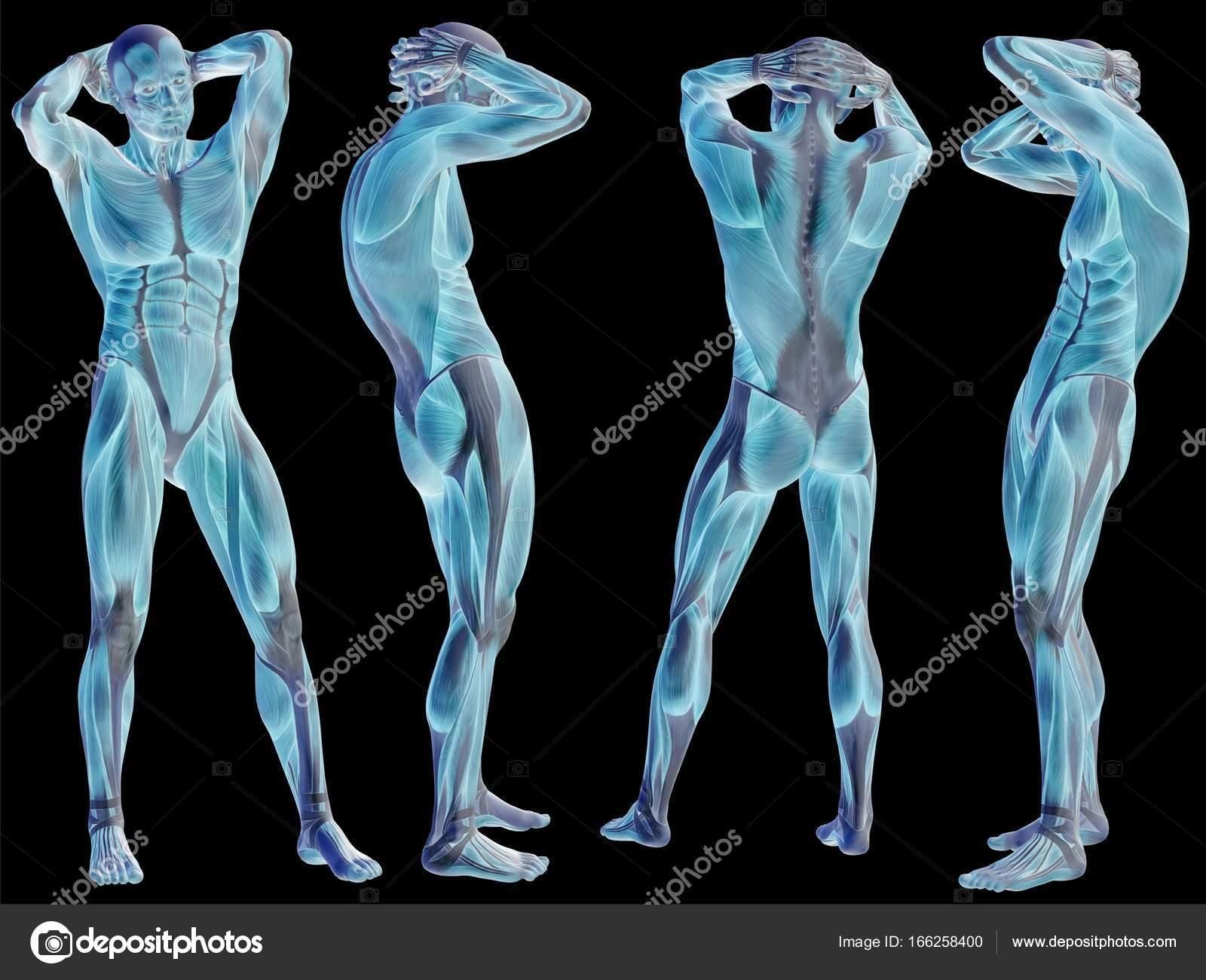 Anatomía 3d conceptual — Foto de stock © design36 #166258400
