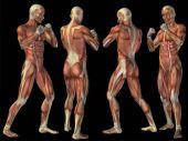 konzeptionelle 3D menschliche Anatomie