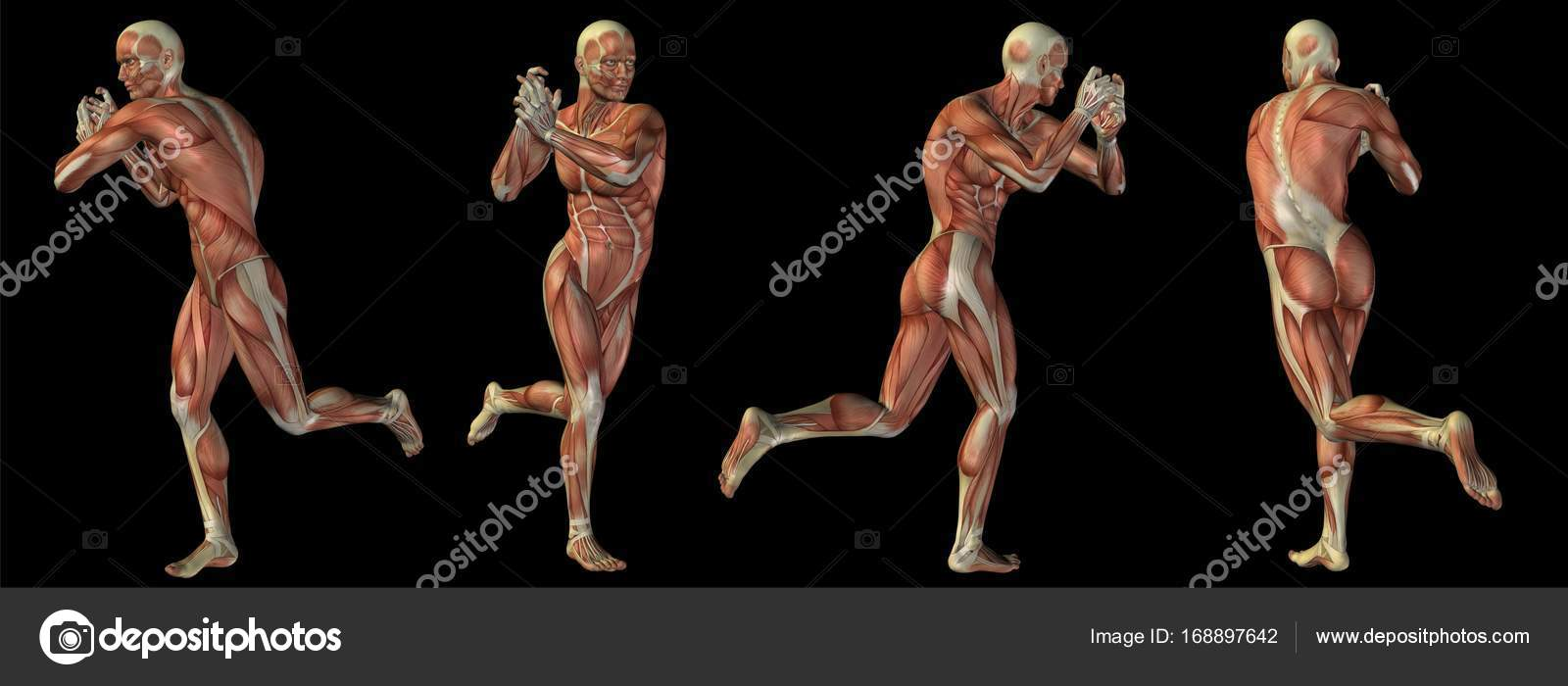 Concept or conceptual human or man 3D anatomy body with muscle ...