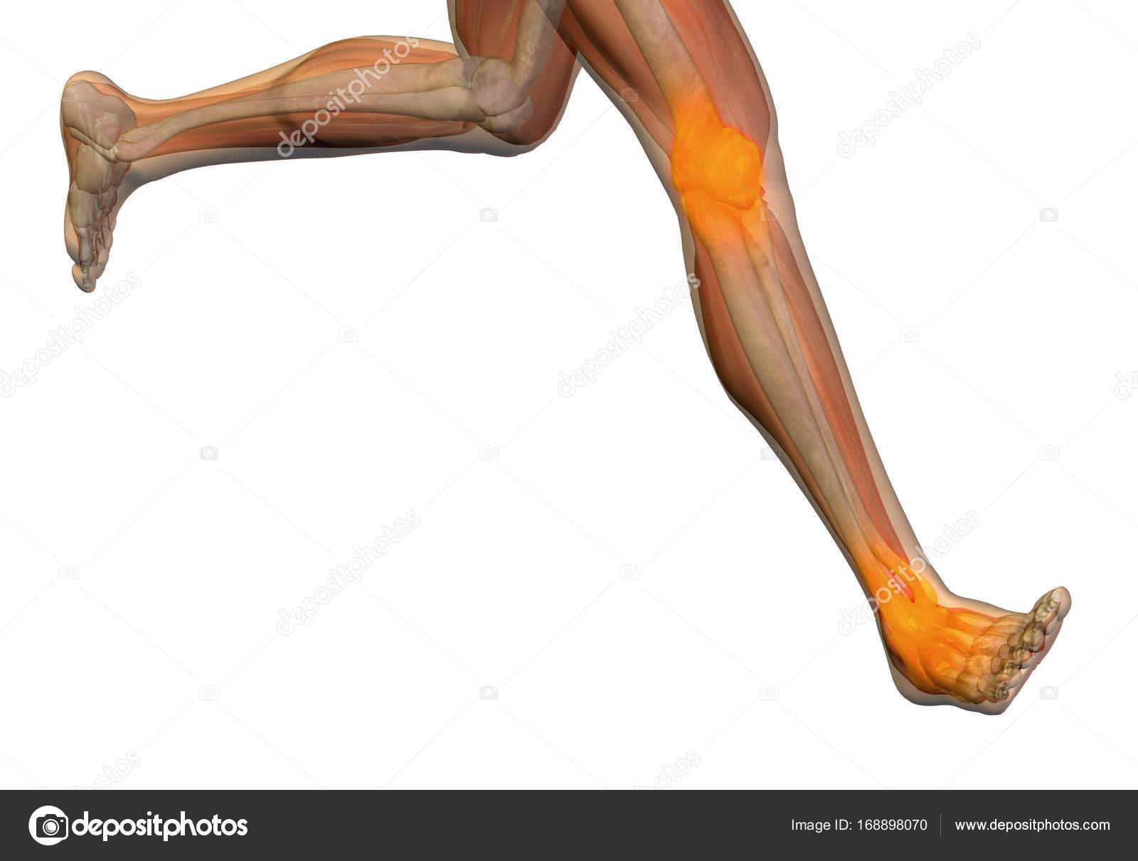 Konzeptionelle Abbildung Mensch Anatomie oder Gesundheit 3D-Design ...