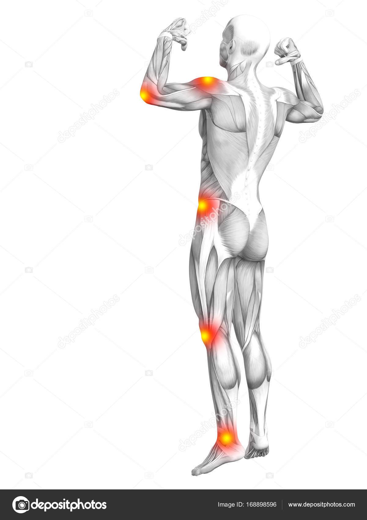 Muman Muskel Anatomie mit roten Flecken — Stockfoto © design36 ...