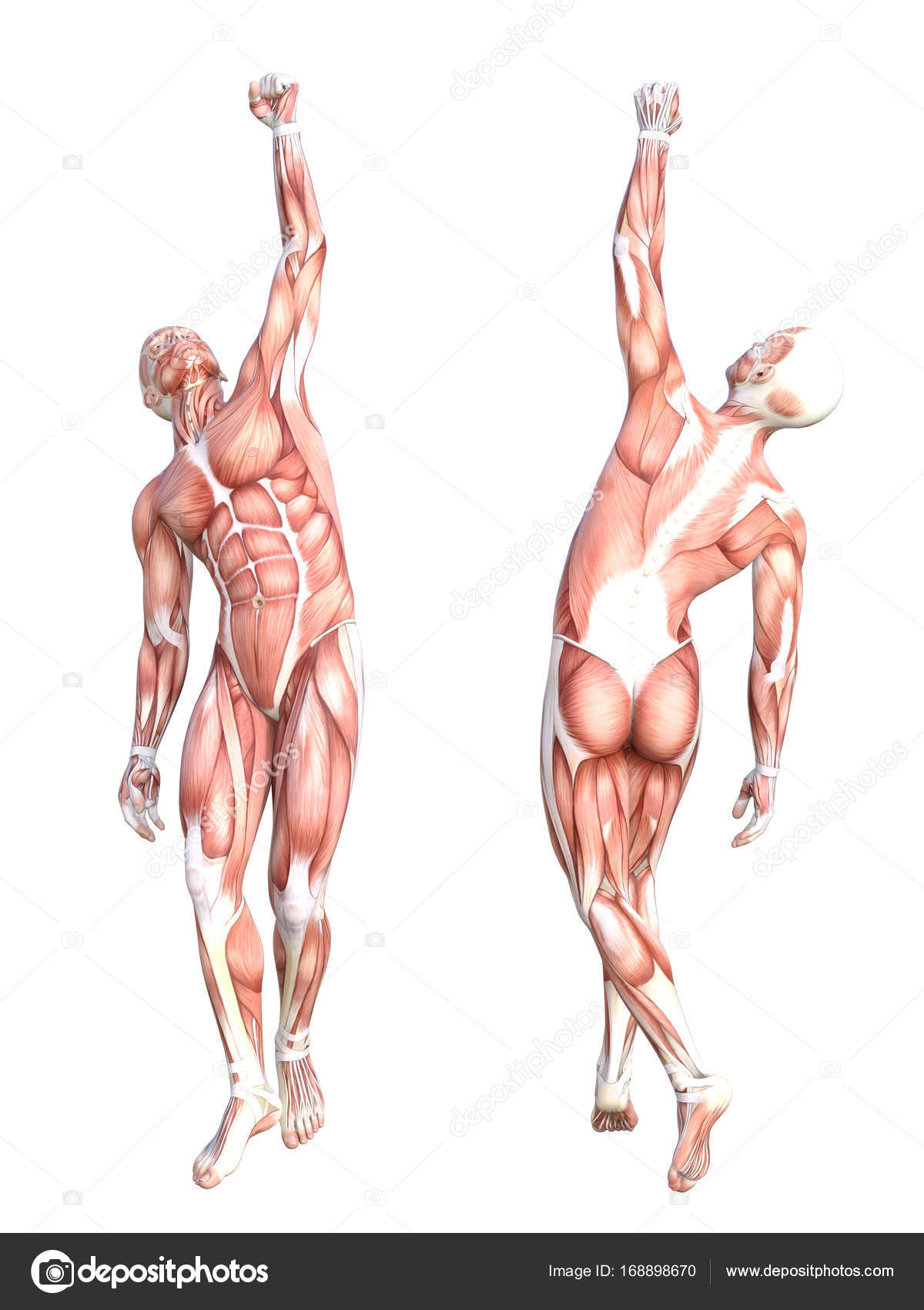 Conceptual de la anatomía del sistema muscular — Foto de stock ...