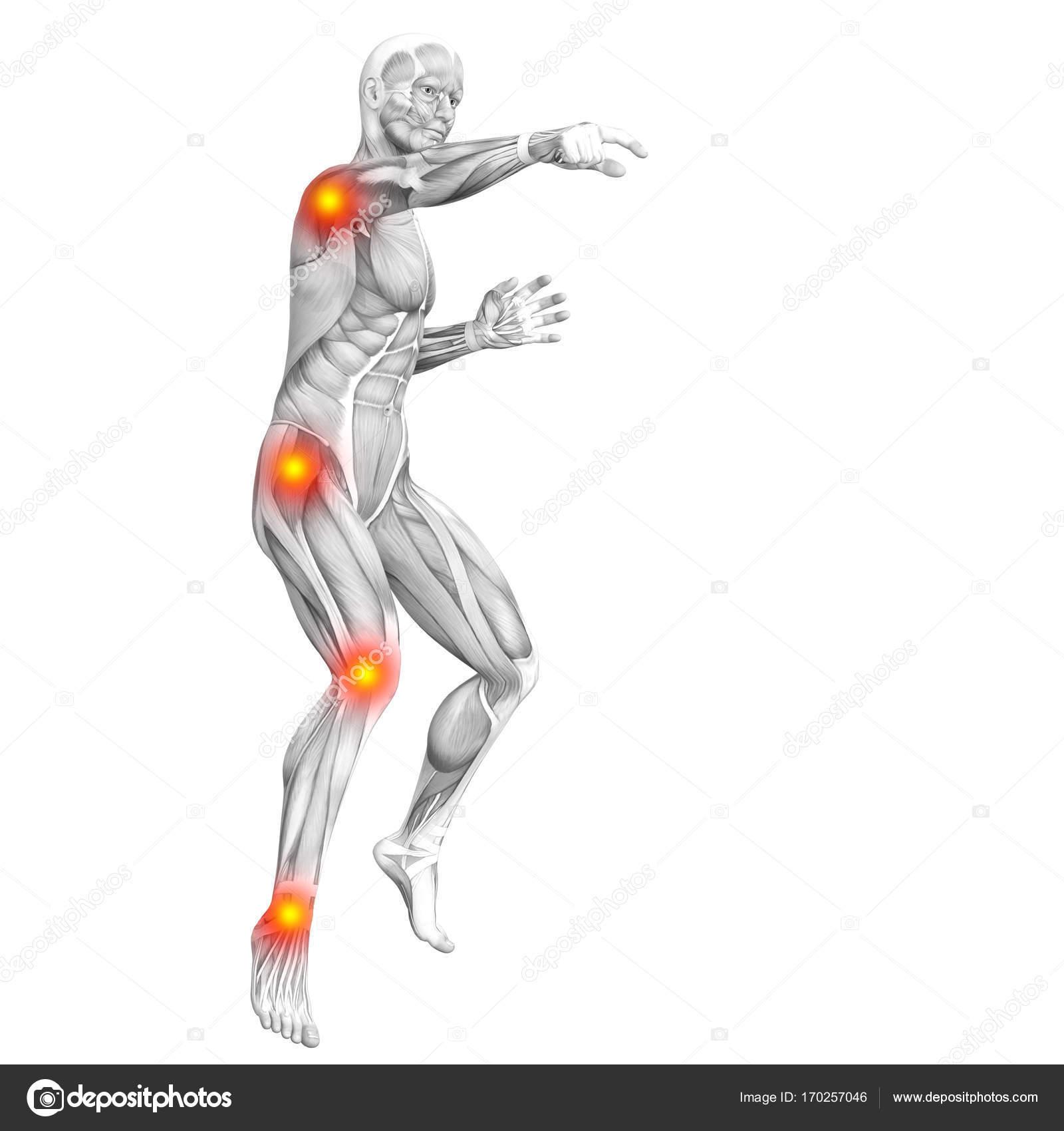 menschlichen Muskel-Anatomie — Stockfoto © design36 #170257046