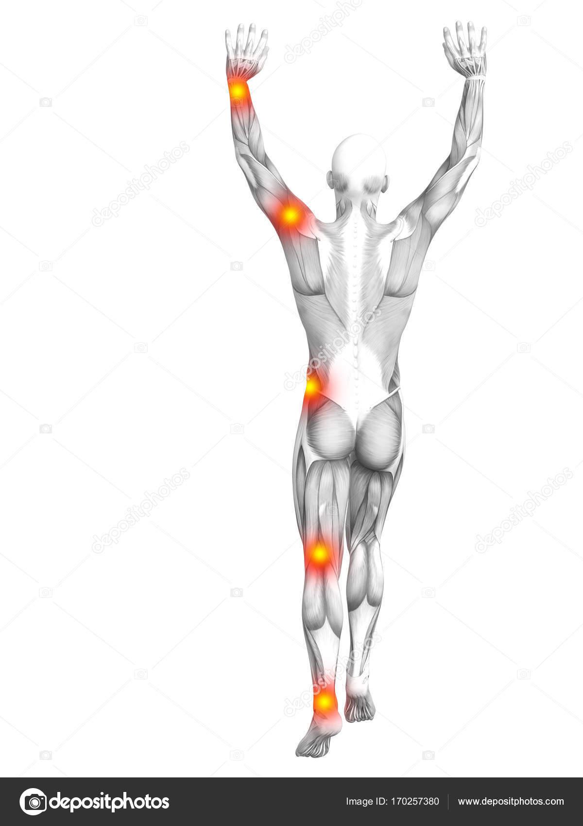 Fantastisch Anatomie Des Menschen 3d Bilder - Anatomie Ideen ...