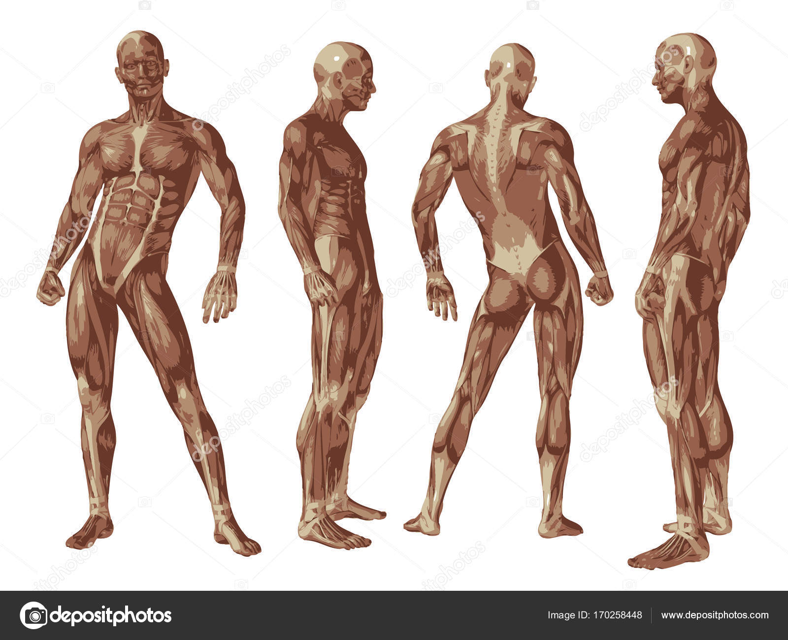Anatomía 3d hombre conceptual — Foto de stock © design36 #170258448