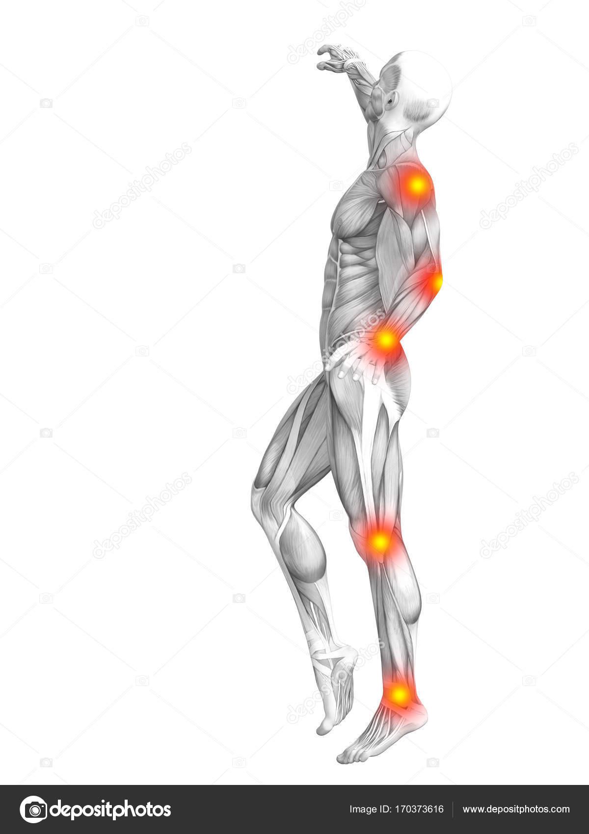 menschlichen Muskel-Anatomie — Stockfoto © design36 #170373616