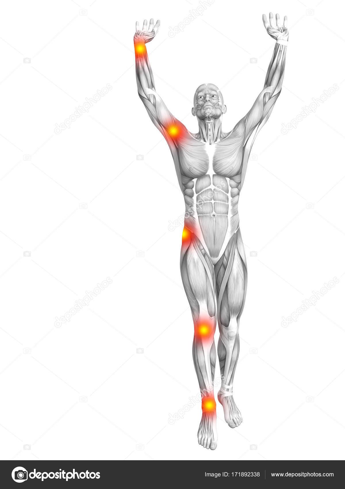 Ziemlich Ellbogen Muskeln Anatomie Bilder - Menschliche Anatomie ...