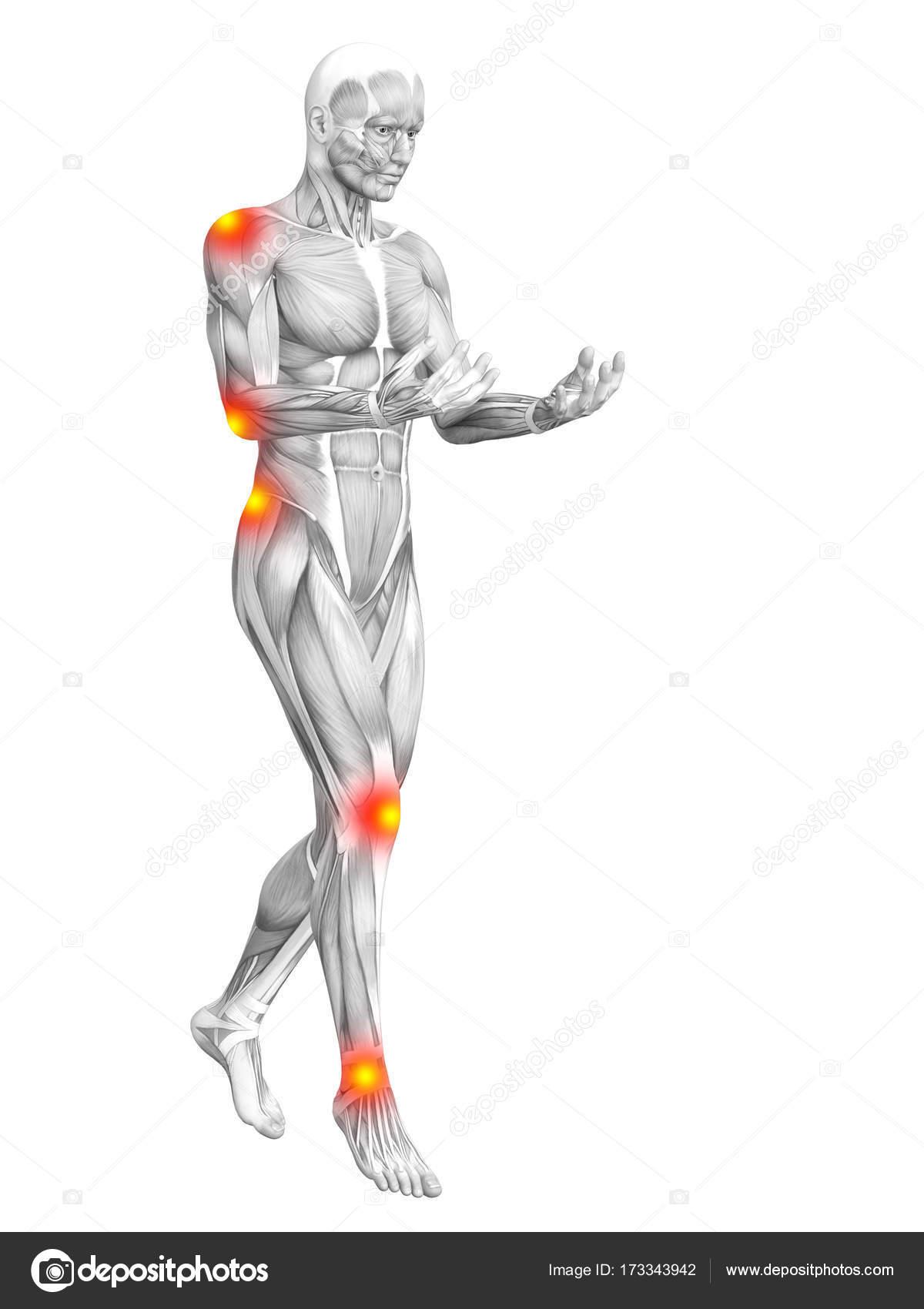 Konzeptionelle Menschlichen Muskel Anatomie Mit Roten Und Gelben ...
