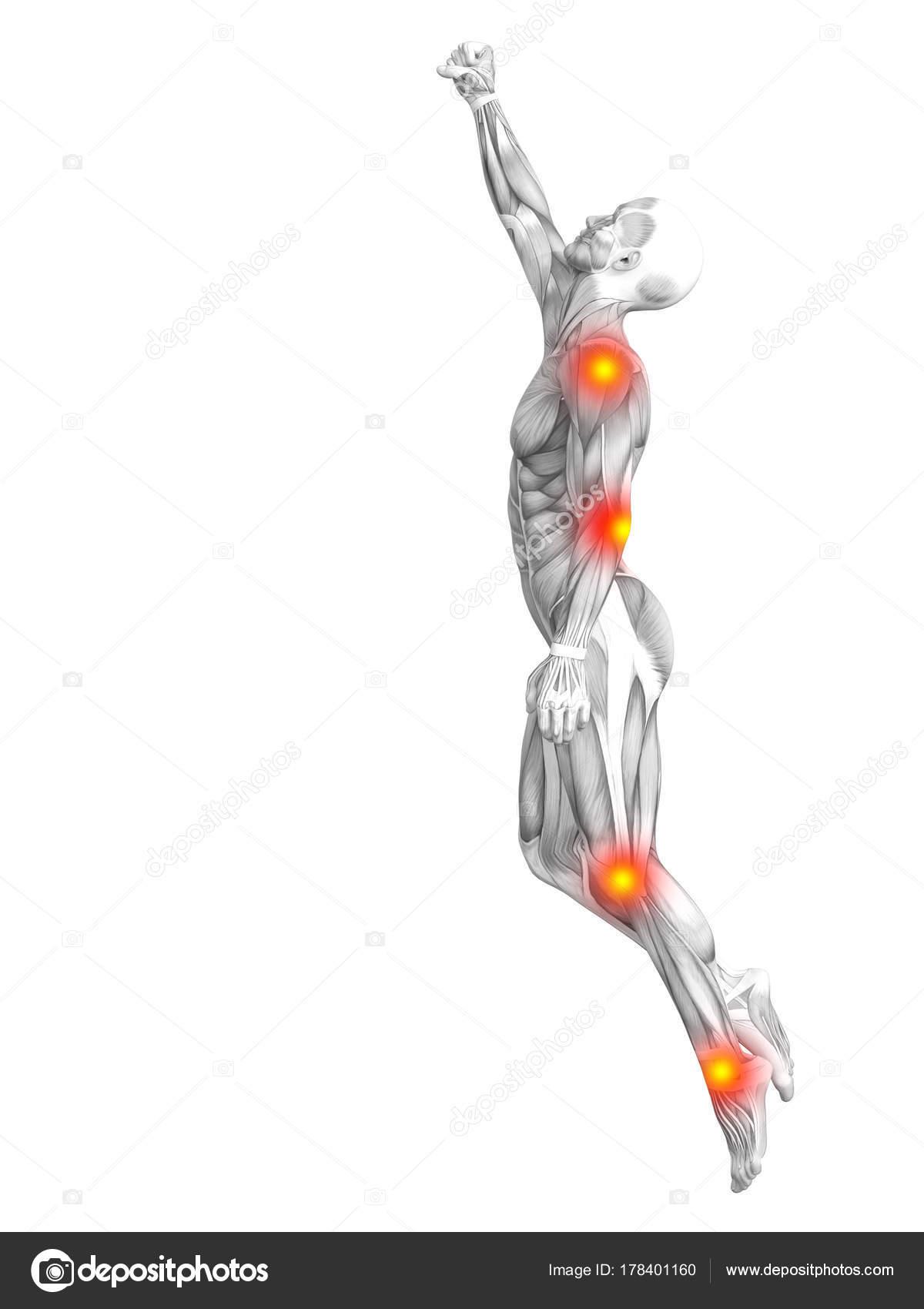 Perfecto Marcado Anatomía Rana Inspiración - Imágenes de Anatomía ...