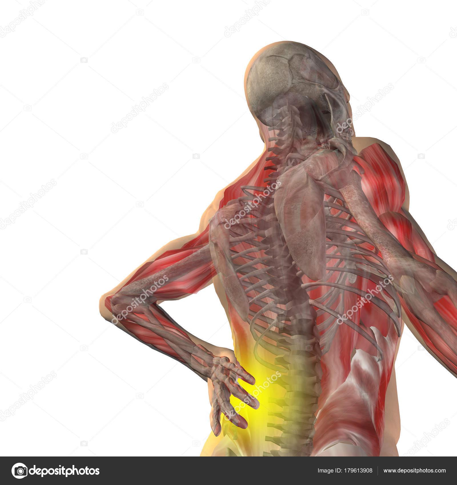 man anatomy with back pain — Stock Photo © design36 #179613908