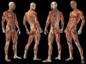 Gelenk- oder Knochenschmerzen